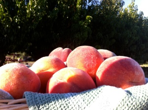 Peaches right off the tree can't be beat!